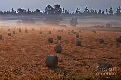 Photograph - Hayfield In Misty Morning by Valerie Garner
