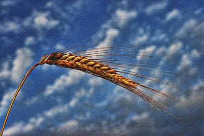 Photograph - Haymaker by Graham Hawcroft pixsellpix