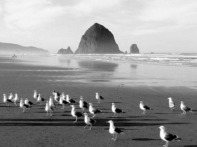 Photograph - Haystack And Seagulls by Will Borden