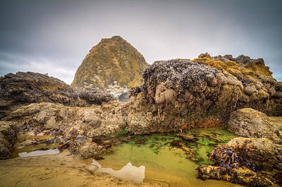 Photograph - Haystack Rock Tide Pool by Joseph Bowman