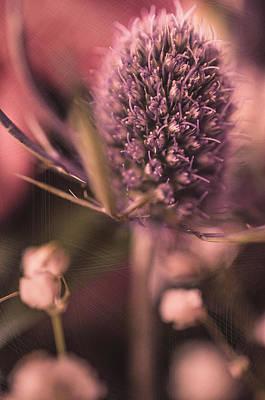 Photograph - Haze  by Maibel  Ziello