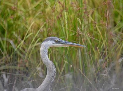 Photograph - Hazy Day Heron by Maria Urso