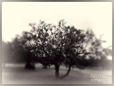 Hazy Tree Art Print