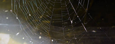 Photograph - Hazy Web by Brent Dolliver