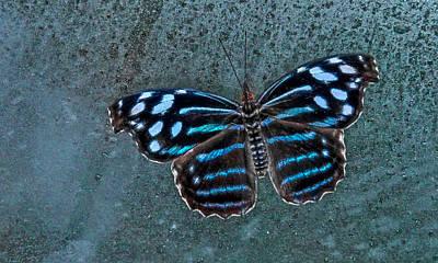 Hdr Butterfly Art Print by Elaine Malott
