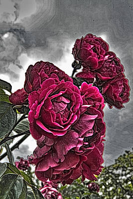 Photograph - Hdr Flowers by Tom Kelly