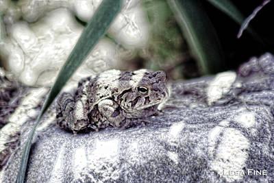Photograph - Hdr Frog Portrait I by Lesa Fine