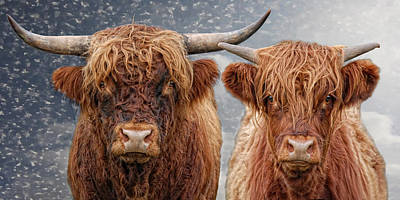 Animals Photos - He and She by Joachim G Pinkawa