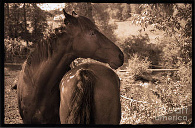 Photograph - Head And Tail by Madeline Ellis