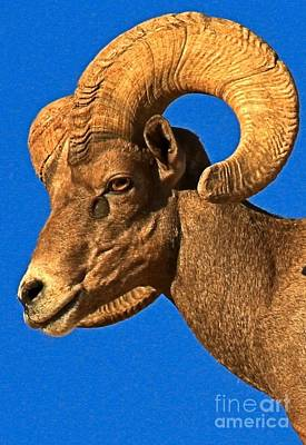 Head Of A Big Horn Art Print by Adam Jewell