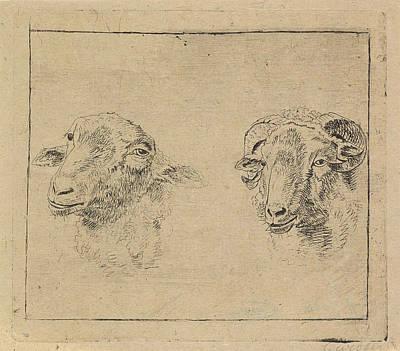 Ram Sheep Drawing - Head Of A Ram And Head Of A Sheep, Carel Webbers by Carel Webbers