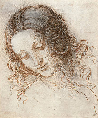 Leda Drawing - Head Of Leda by Leonardo da Vinci
