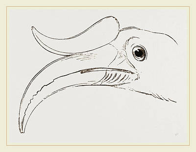 Hornbill Drawing - Head Of Rhinoceros Hornbill by Litz Collection