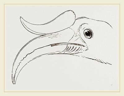 Hornbill Drawing - Head Of Rhinoceros Hornbill by Litz Collection