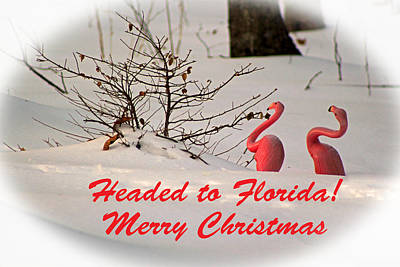 Photograph - Headed To Florida by Lorna Rogers Photography