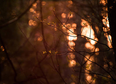 Photograph - Healing Light by Haren Images- Kriss Haren