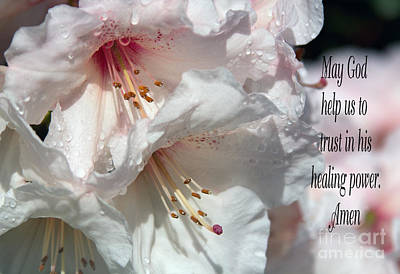 Jean_okeeffe Photograph - Healing Power by Jean OKeeffe Macro Abundance Art