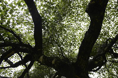 Photograph - Healing Power Of Nature 6 by Teo SITCHET-KANDA