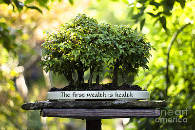 Photograph - Health Is Wealth Bonsai Trees by Beverly Claire Kaiya