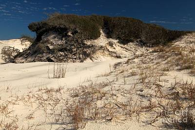 Photograph - Healthy Dunes by Adam Jewell