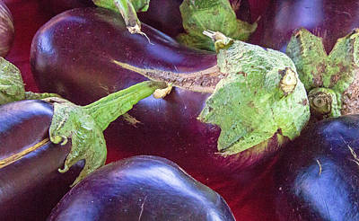 Photograph - Healthy Egg Plant by Deb Buchanan