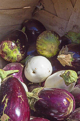 Photograph - Healthy Egg Plants In A Basket by Deb Buchanan