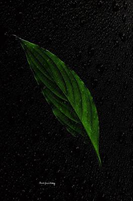 Photograph - Healthy Green by Randi Grace Nilsberg