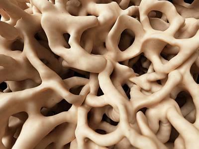 Digitally Generated Image Photograph - Healthy Human Bones by Sebastian Kaulitzki