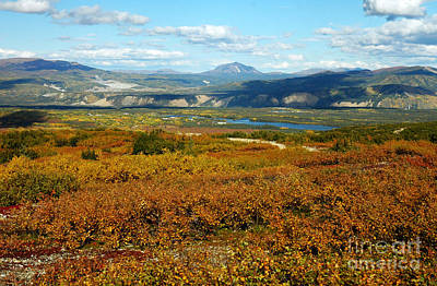 Photograph - Healy Valley Ak by Cindy Murphy - NightVisions