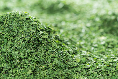 Caravaggio - Heap of dried Parsley by Handmade Pictures