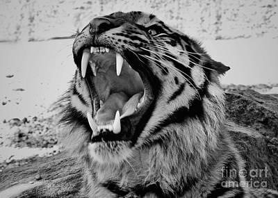 Photograph - Hear Me Roar Bw by Mindy Bench