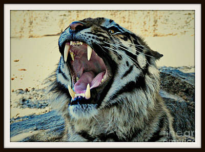 Photograph - Hear Me Roar by Mindy Bench