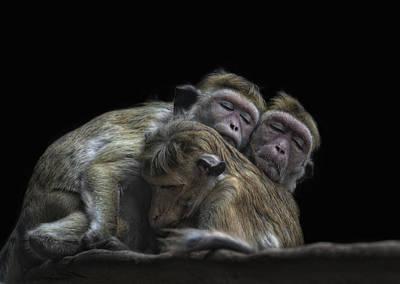Monkey Photograph - Hear No Evil See No Evil Speak No Evil by Joachim G Pinkawa