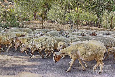 Unity Painting - Heard Of Sheep by Stefano Senise
