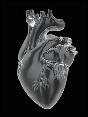 Heart And Coronary Arteries, Artwork Art Print by Science Photo Library
