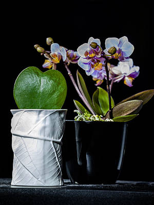 Photograph - Heart And Orchids by Alfio Finocchiaro