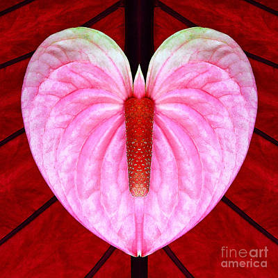 Photograph - Heart Flower Butterfly W Candle by Joseph J Stevens