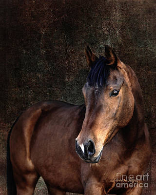 Forelock Photograph - Heart by Karen Slagle