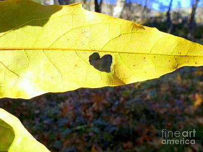 Heart Leaf Art Print by Marlene Rose Besso