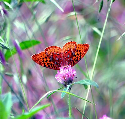 Photograph - Heart Of A Butterfly by Deena Stoddard