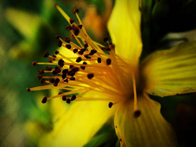 Art Print featuring the photograph Heart Of A Flower by Zinvolle Art