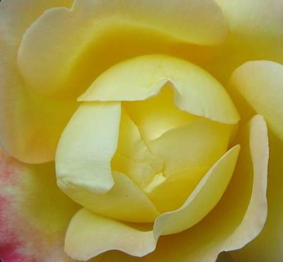 Heart Of A Yellow Rose Art Print by Brian Jones