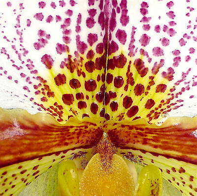 Photograph - Heart Of An Orchid by Denise Mazzocco