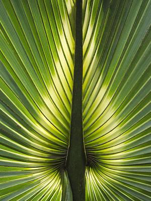 Heart Of Palm Art Print by Roger Leege
