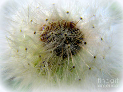 Heart Of The Dandilion Art Print