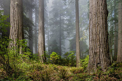 Photograph - Heart Of The Forest by Greg Nyquist