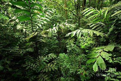 Heart Of The Rain Forest - Costa Rica Print by Matt Tilghman
