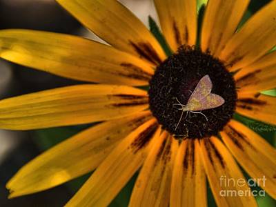 Photograph - Heart On A Flower by Peggy Hughes