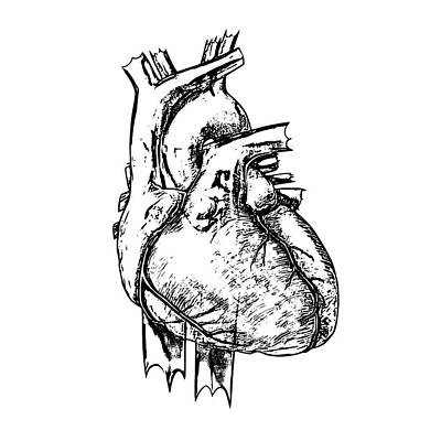 Heart Print by Russell Kightley