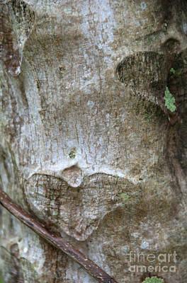 Photograph - Heart Scars by Jackie Farnsworth